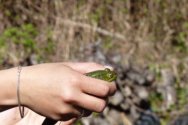 biodiversite_2.grenouille