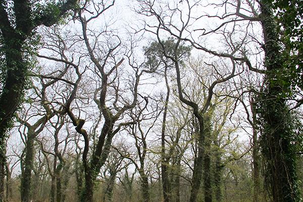 bouclerandonnee_2.arbres