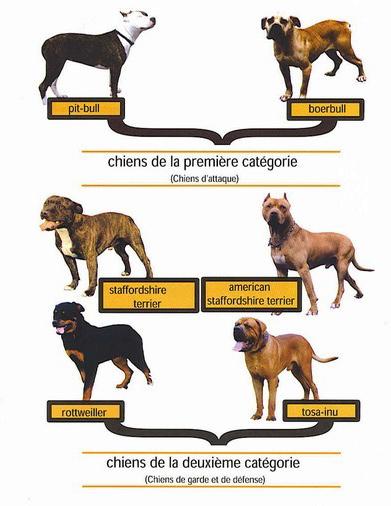 chiens-catégorisés